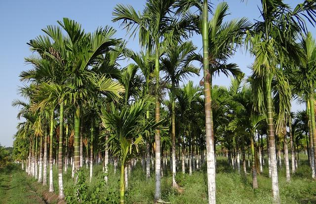 Palmovy olej